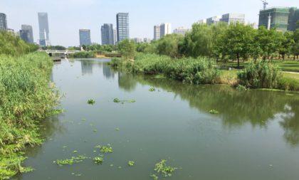 Ny park som lyckas rena näringsämnena i floden med över 85 procent.